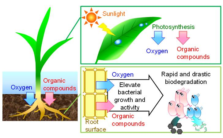 biodegradation research papers